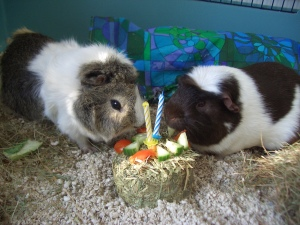 Victor celbrates his second birthday with Hugo (the candles are only there for the picture)