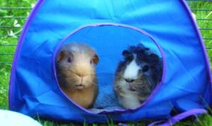 Fred and Victor in the tent in the garden